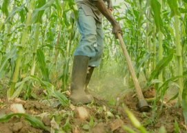 Permagarden Training in Nigeria Cultivates Hope Among Rural Farmer Families
