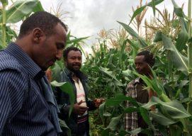 Impact and Optimism: The Story of One Nuru Ethiopia Farmer During the 2014 Belg Season