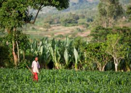 Nuru Ethiopia Agriculture Program: Applying Lessons Learned in 2015