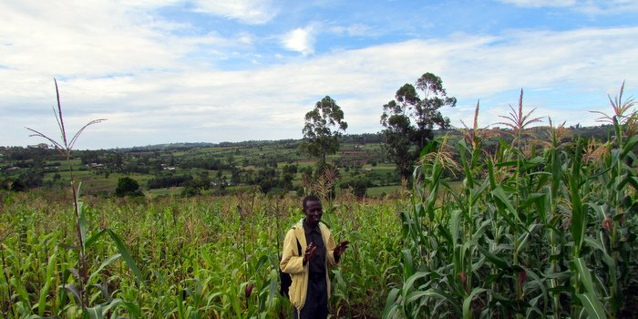 Field Manager Josphat compares non-Nuru (left) to Nuru crop yields (right) (Nuru Kenya).