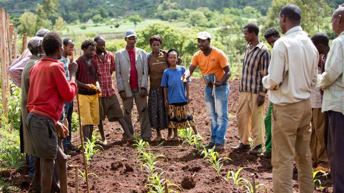 Nuru Ethiopia Farmer Households Are Better Off Than Non-Nuru Farmers
