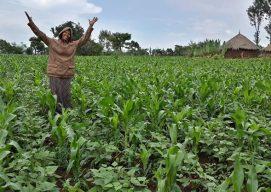 How Banchi Helped 154 Nuru Farmer Households