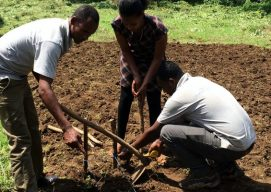 Planting Maize, Beans, Wheat and Teff in Ethiopia