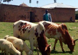 Petit Rebwi Inspires Fellow Community-Owned Cooperatives