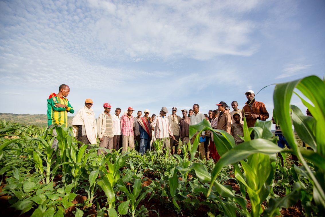 Nuru Partners to Build Sustainable Farmer Organizations