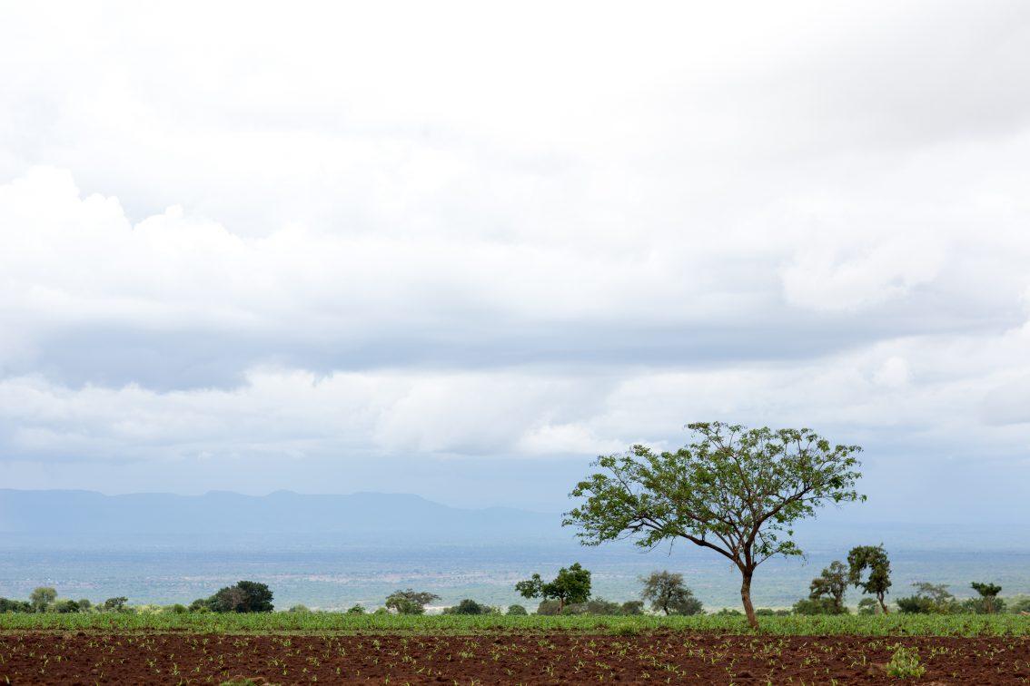 On-farm Livelihood Diversification for Rural Ethiopia