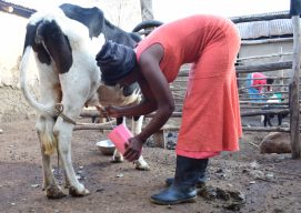 Learning trip inspires farmers to invest in dairy farming