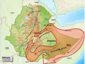 map of desert locusts in Ethiopia