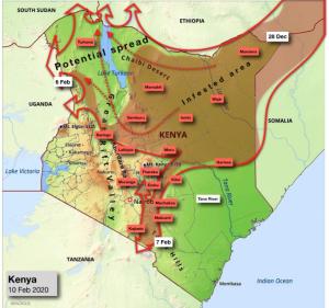 kenya desert locust migration