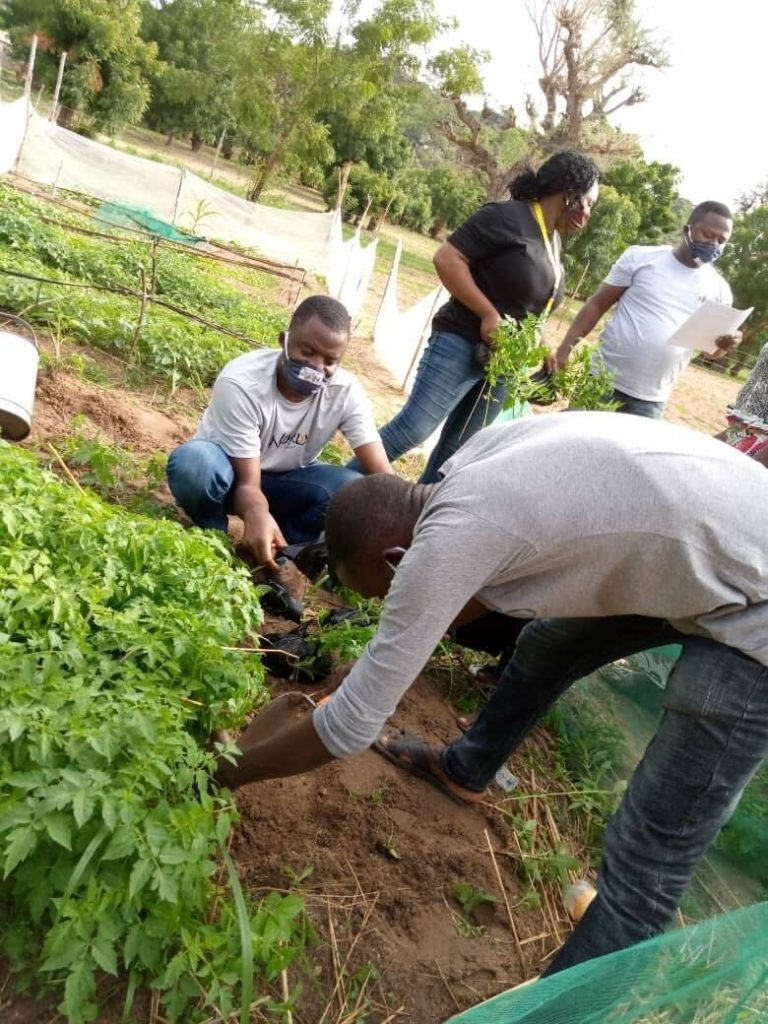harvesting starts for farmers