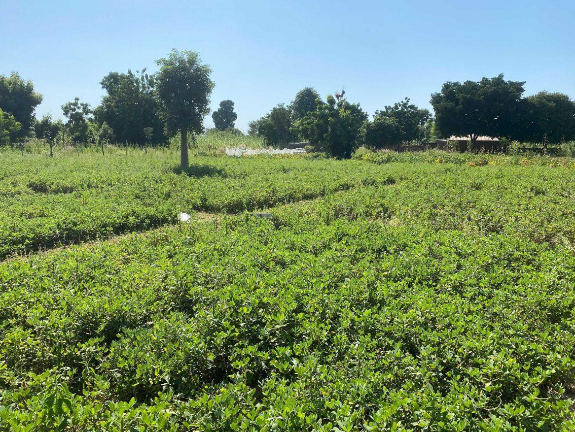 Nuru Nigeria Sprouts Hope Despite Hard Harvest Year