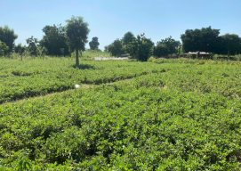 Nuru Nigeria Sprouts Hope Despite Hard Harvest Year