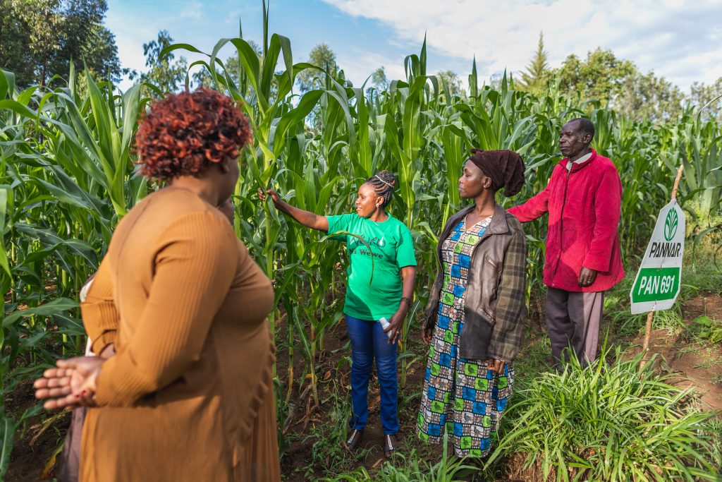 people standing in corn field together