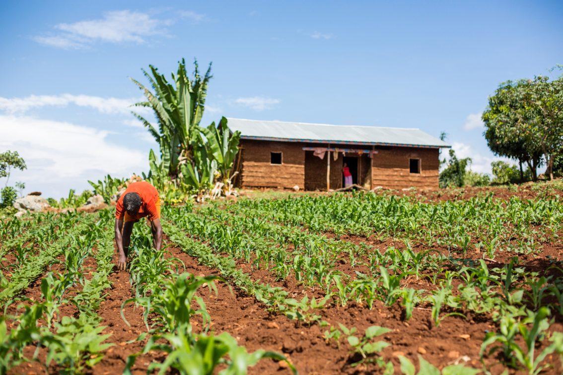 Transforming Rural Economies Through Professional Farmer Organizations