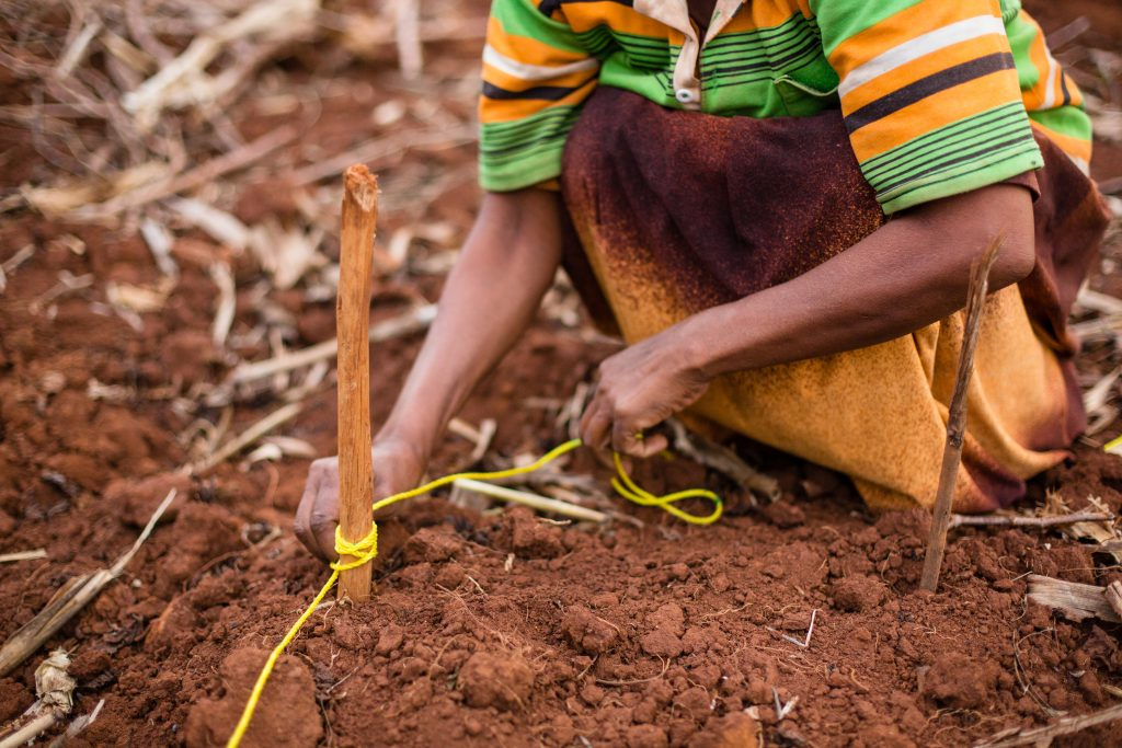 farmer planting seeds