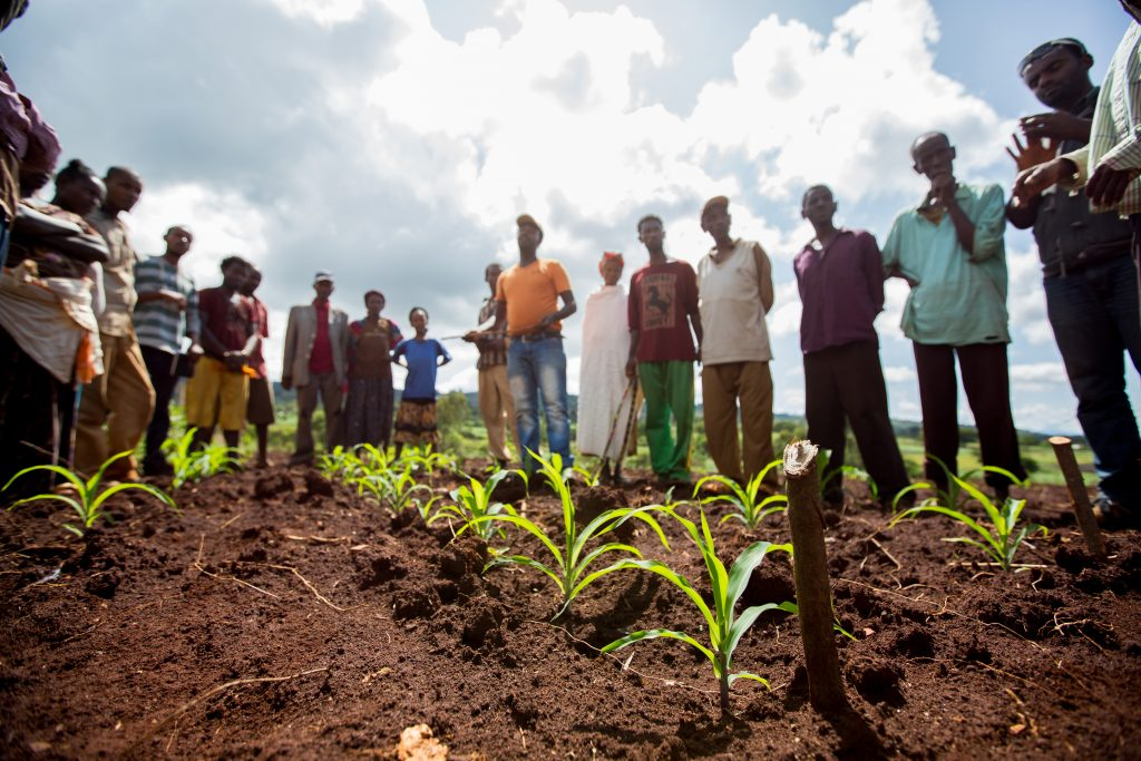 farmers gathered in a field by maize plants